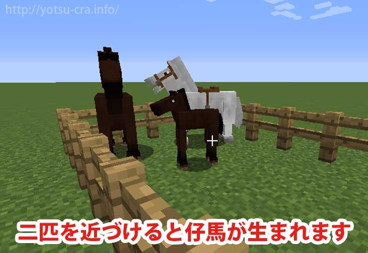 二匹を近づけると仔馬が生まれます