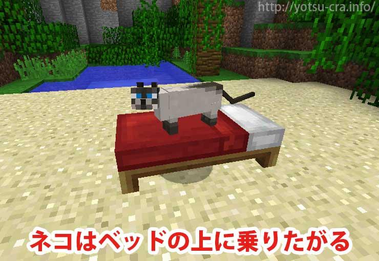 ネコはベッドの上に乗りたがる